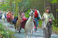 llama trekking smoky mountains